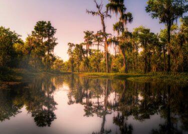 【Roots Music】Mississippi Delta – ブルース発祥の地